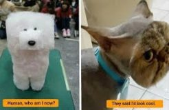 10+ Times Pet Haircuts Went So Wrong, It's Hilarious