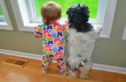FUNNY DOGS & BABIES COLLECTION