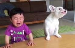 DOG eats baby's food, DOG cries with Baby, CUTENESS overload!