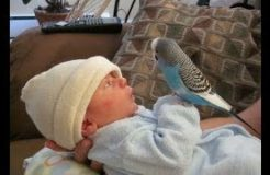 Cute Bird Falling in Love with Baby - Funny Parrots and Babies Compilation