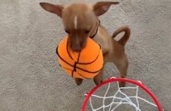 The Most Impressive Doggy Slam Dunk You