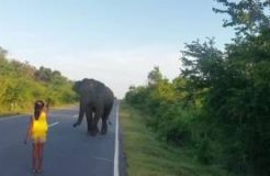 Little Girl Stands Up To Elephant And Sends Him Running Away