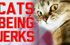 Cats Being Jerks Video Compilation