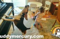 THE MOST AMAZING AND HYSTERICAL VIDEO ON THE INTERNET!!!! Feat. Buddy Mercury Dog and Lil Sis!